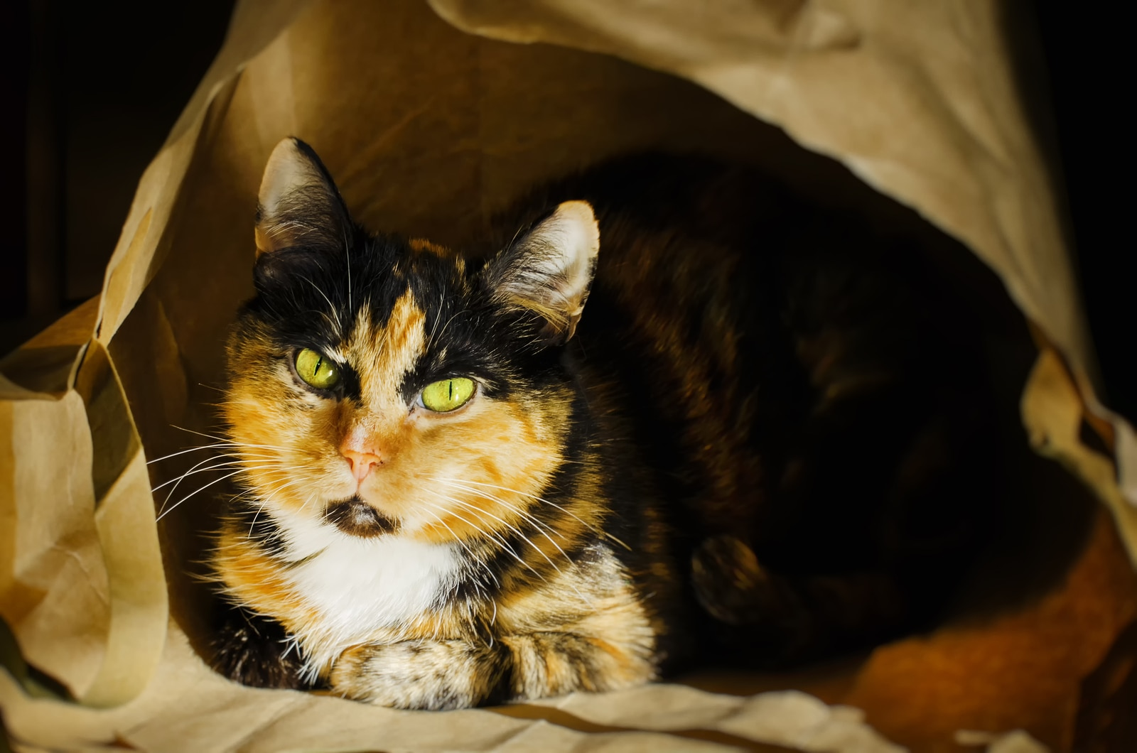 Calico cat with intense yellow eyes peering out of a brown paper bag.